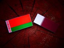 Belarus flag with Qatari flag on a tree stump isolated. Belarus flag with Qatari flag on a tree stump Stock Photo