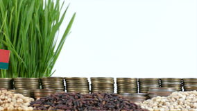 Belarus flag waving with stack of money coins and piles of wheat. And rice seeds stock video