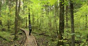 belarus fotógrafo caucásico activo joven de la mujer que toma las fotos en forma de vida activa del bosque del otoño en berezinsk almacen de metraje de vídeo