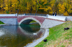 Belarus, Gomel, the Swan Pond in the autumn park Stock Images