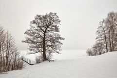 Belarus, Grodno, Molochnoe Lake. Lonely tree on the shore in winter. Royalty Free Stock Photos