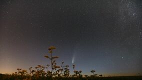 Belarus. 18 July 2020. Comet Neowise C/2020 F3 In Night Starry Sky Above Flowering Buckwheat Agricultural Field. Night