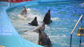 BELARUS, MINSK - 2014: Dolphins show in the dolphinarium stock footage