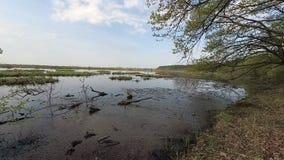 belarus Mola Floresta em um monte no período de ponto alto video estoque