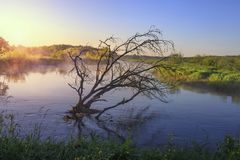 Belarus nature landscape. Old dry tree in calm river in the morning. stock photography