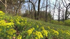 belarus Primavera Bosque con verdor joven en abril metrajes
