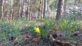 belarus Primavera Bosque con verdor joven en abril almacen de metraje de vídeo