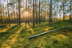 belarus Sol hermosa de Sun de la salida del sol de la puesta del sol en Sunny Summer C imagen de archivo