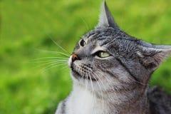 Kot w naturze obrazy stock