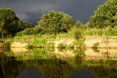 The Belarusian landscape. Polissya. in the rays of the evening sun royalty free stock images
