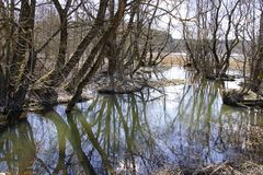 Belarusian landscape. Vyacha river in the month of April. Bright sunny day. Water and reflection of trees. Sunlight and shadow royalty free stock image