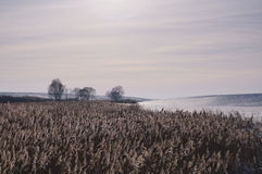Belarusian landscape in winter Stock Photos