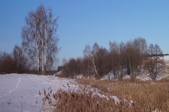 Belarusian landscape in winter Stock Photography