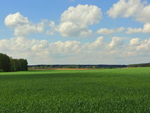 Belarusian open spaces. Belarusian landscape, beautiful nature with endless green fields, forests and villages Royalty Free Stock Photography