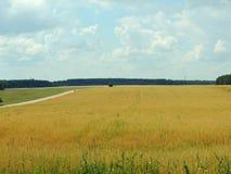 Belarusian rural landscape. Ripe Oat field Stock Photography