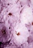 Belas artes do close-up, flores imagens de stock
