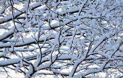 Belastete Äste drehen sich unten von spät noch Ostern-Schneefälle Lizenzfreies Stockfoto