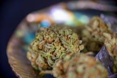 Belastning för tangie för cannabisknoppar som sur isoleras på den abal svartinsidan Royaltyfri Fotografi