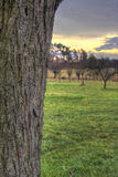 Belastung der Pflaume mit Sonnenunterganglandschaft Lizenzfreies Stockbild