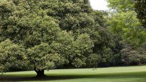 Belaubte Bäume im Park Stockbild