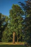 Belaubte Bäume und Leute, die Freizeit in einem Park bei Sonnenuntergang in Tielt haben Lizenzfreies Stockbild