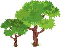 Belaubte grüne Bäume Lizenzfreies Stockbild