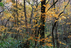 Belaubte Herbstbäume Stockfotos