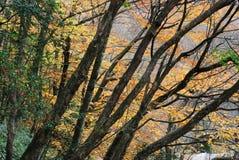 Belaubte Herbstbäume Lizenzfreies Stockbild