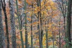 Belaubte Herbstbäume im Wald Stockbild