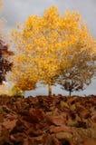 Belaubte Herbstszene Stockbild