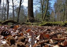 Belaubter Forest Floor Stockfoto