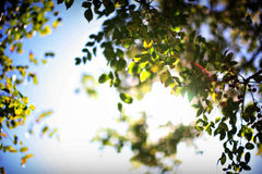 Belaubter grüner Baum und blauer Himmel Lizenzfreies Stockbild