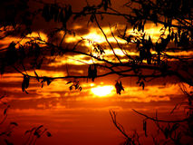 Belaubter Sonnenuntergang Stockfotos