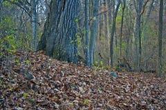 Belaubter Teppich im Wald Stockbilder