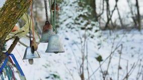 Belces en un bosque del invierno que sopla suavemente en el viento almacen de metraje de vídeo