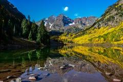 Belces marrón, Aspen, Colorado Foto de archivo libre de regalías