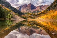 Belces marrón, Aspen, Colorado Fotografía de archivo