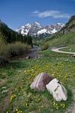 Belces marrón, Colorado Imagen de archivo