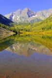 Belces marrón, gama de los alces, Rocky Mountains, Colorado fotografía de archivo