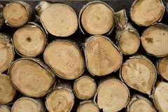 Bele drewno Obrazy Stock
