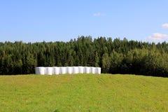 Bele kiszonka na Zielonym lata polu Obraz Stock