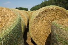 Bele pszeniczna słoma mechanically pakowali w zielonej plastikowej siatce po zbierać Wiejski krajobraz na lato słonecznym dniu Obraz Royalty Free