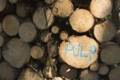 bele pulp drewno obrazy royalty free