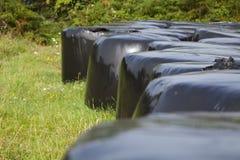 Bele zawijać up w czarnym klingerycie nad słoma zielenieją pole w lecie, Galicia, północny Hiszpania zdjęcie royalty free