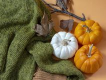 Beleidigen Sie Lageherbstkürbise mit strickender Strickjacke und getrockneten Blättern lizenzfreie stockfotografie
