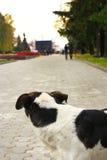 Beleidigter Hund findet die Freiheit von seinen Meistern Lizenzfreie Stockbilder