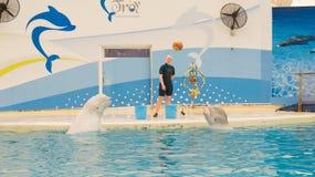BELEK,土耳其- 2014年10月04日:海豚展示,特洛伊Dolphinarium 两条白海豚鲸鱼 免版税库存图片