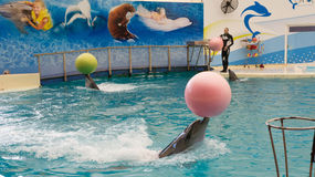 BELEK, TURKEY - OCTOBER 04, 2014: Dolphins show, Troy Dolphinarium. Two bottlenose dolphins. Playing with balls Royalty Free Stock Images
