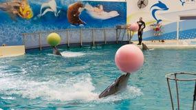 BELEK TURKIET - OKTOBER 04, 2014: Delfinshow, Troy Dolphinarium bottlenosedelfiner två Royaltyfria Bilder