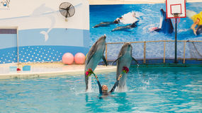 BELEK, TURQUIA - 4 DE OUTUBRO DE 2014: Mostra dos golfinhos, Troy Dolphinarium Dois golfinhos de bottlenose imagem de stock
